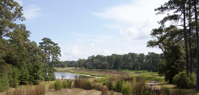 Hole 1, like all of Bluejack National, is currently overgrown and hasn't been maintained in years. But Tiger Woods, Bluejack President Casey Paulson, and his crew are already in the process of turning the former Blaketree National site into one of the nation's premier golf communities.  [Photo: Cheyne Kendall]
